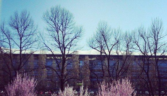 Vista sul campus primavera